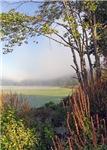 Hatch Pond - Mist - Color