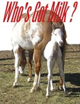 Whos Got Milk ?