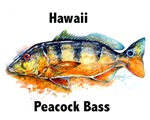 Peacock Bass with Text