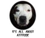 IT'S ALL ABOUT ATTITUDE (PIT BULL)