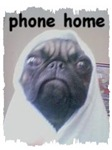 phone home (et look alike pug)