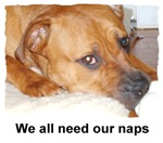 we all need our naps