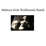 Midwest Irish Wolfhounds Ranch-1