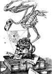 Bird Skeleton on Skull