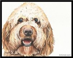 Henry the Goldendoodle