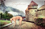 Castle Greyhound