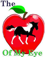 Pinto Racking Horse Apple of My Eye