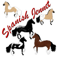 Spanish Jennet