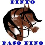 Pinto Paso Fino Head