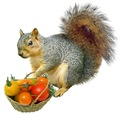 Squirrel with Tomato Basket