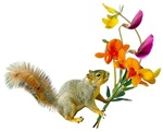 Squirrel with Wildflowers