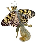 Flying Butterfly Squirrel