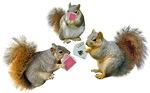 Squirrels Poker
