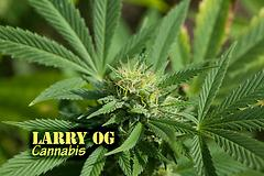 Larry OG (with name)