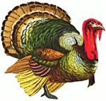 Thanksgiving Tom Turkey