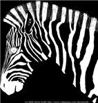 Zebra portrait L neg.