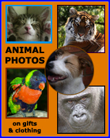 ANIMALS ON T-SHIRTS & GIFTS
