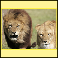 LION T-SHIRTS & GIFTS