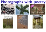 Photographs with poetry