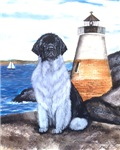 Newfoundland Lighthouse Dog Landseer