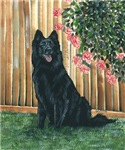 Belgian Sheepdog Happy