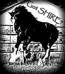 Got Shire