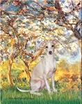 SPRING<br>Italian Greyhound