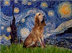 STARRY NIGHT<br>& Bloodhound