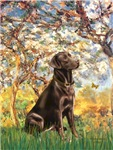 SPRING<br>With a Chocolate Labrador (#11)