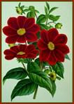 Flower Vintage Print