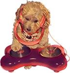 DJ Dog E Dog