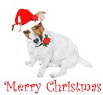 JRT Holiday: Christmas Festive and Fun 2
