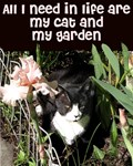 My cat and my garden