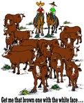 Cattle & Horses