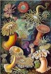 Vintage Ernst Haeckel