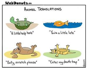 Animal Translations