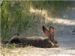 Nap Time Jackrabbit