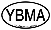 YBMA Yellow-billed Magpie Alpha Code
