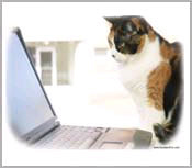 Cat Posters & Cat Pictures