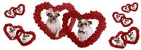More Bulldog Love