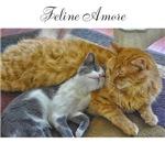 Feline Amore