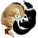 Collie/Border Collie Circle