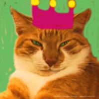 King Creola Orange Cat