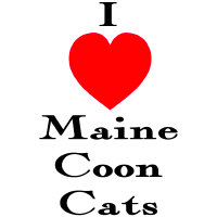 I love Maine Coon Cats
