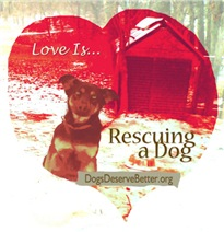 Love is...Rescuing a Dog