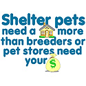Shelter Pets Need You