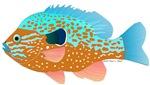 Longear Sunfish fish