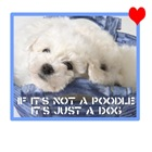 Poodle Puppy t-shirts & tees