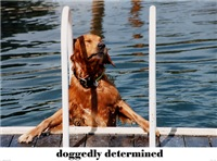 doggedly determined...