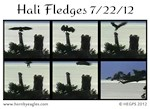 Hali Fledges 7/22/12